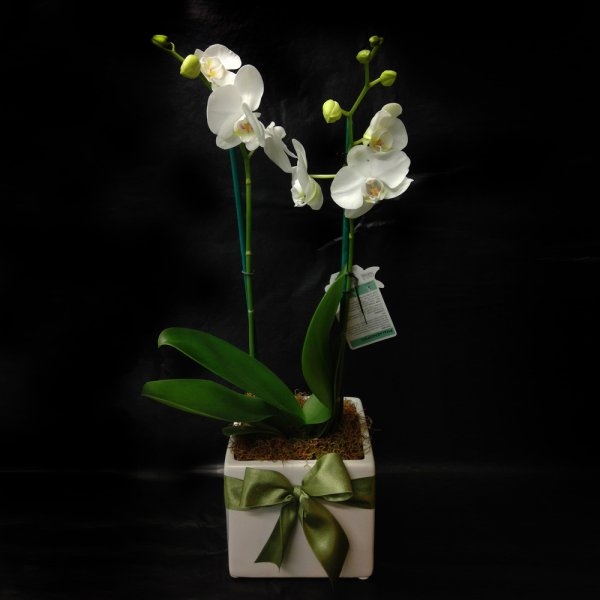 Product image: Potted Plant